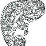 Mandala camaleon
